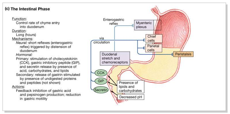 secretin functions to stimulate the