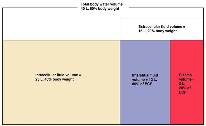 fluid retention weight loss