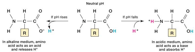 how does the phosphate buffer system work