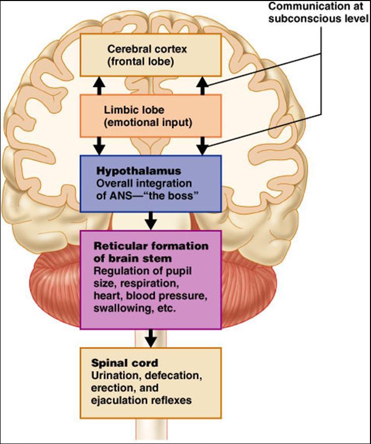 Somatic Senses Education: Associate Degree Nursing Physiology Review