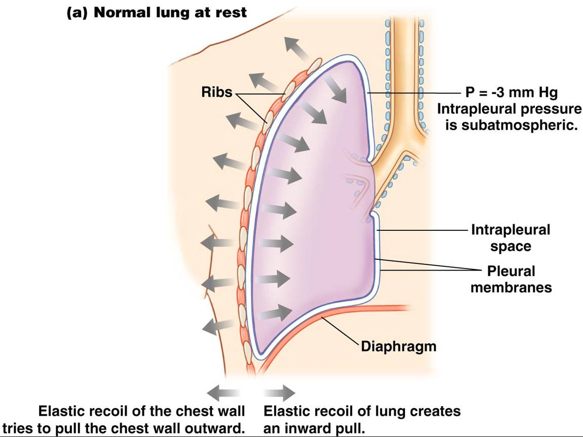 surfactant lungs corticosteroids