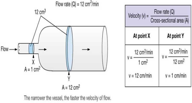 describe the relationship between vessel radius and blood flow rate
