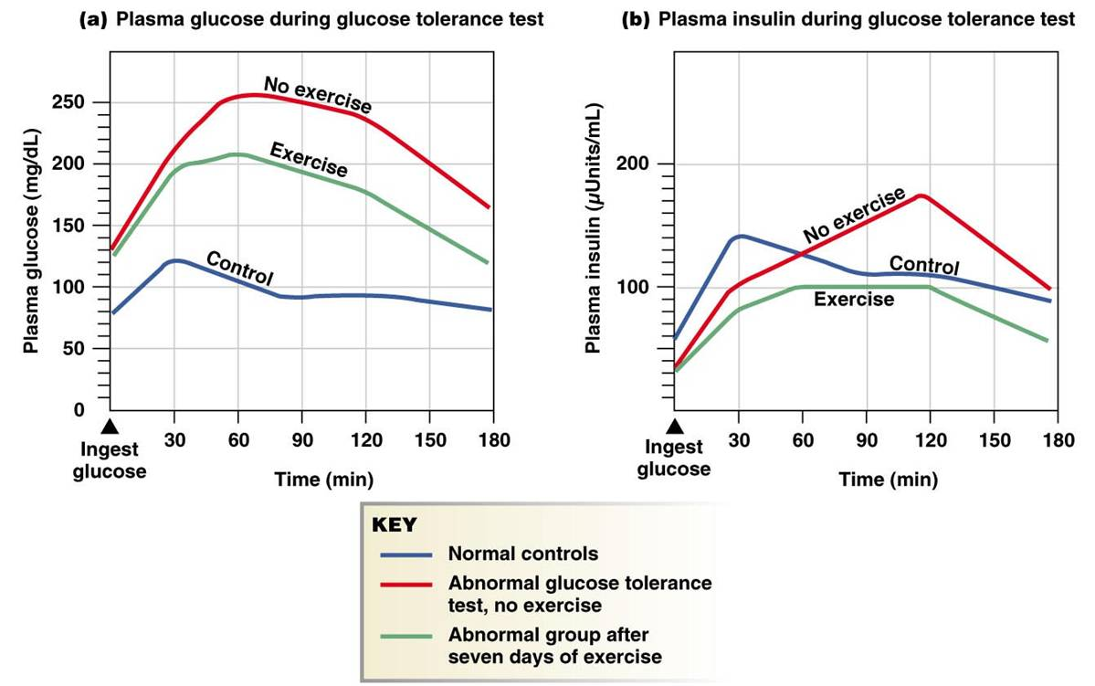 effects of exercise on diabetes Context exercise is widely perceived to be beneficial for glycemic control and  weight loss in patients with type 2 diabetes however, clinical.