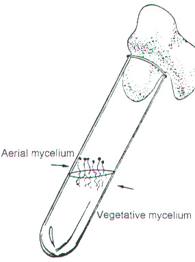 MLAB1331 Lab Manual