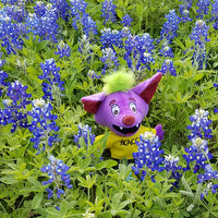 R.B stuffed animal in bluebonnet field