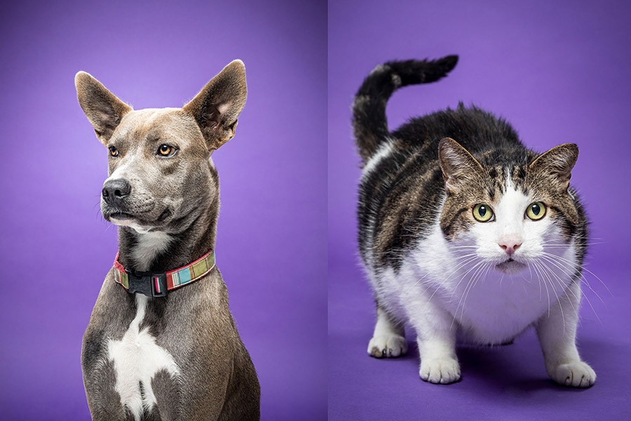A dog and cat that were available for adoption in 2019 through ACC's Veterinary Technology program.