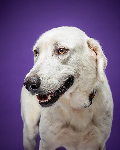 Dixon the dog