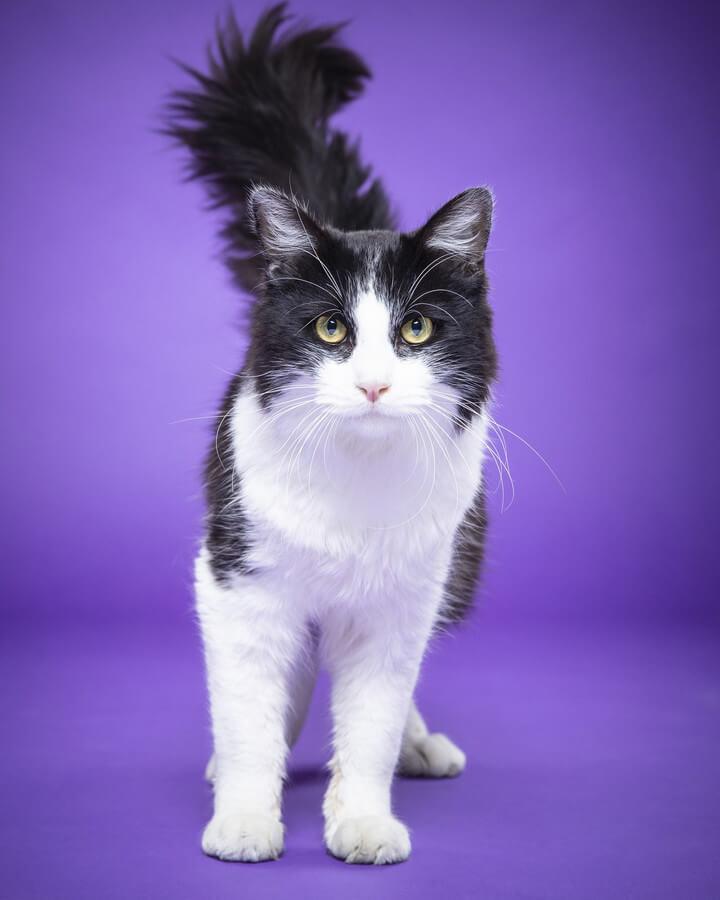 Adolfo the cat
