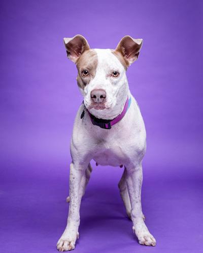Ava the dog.