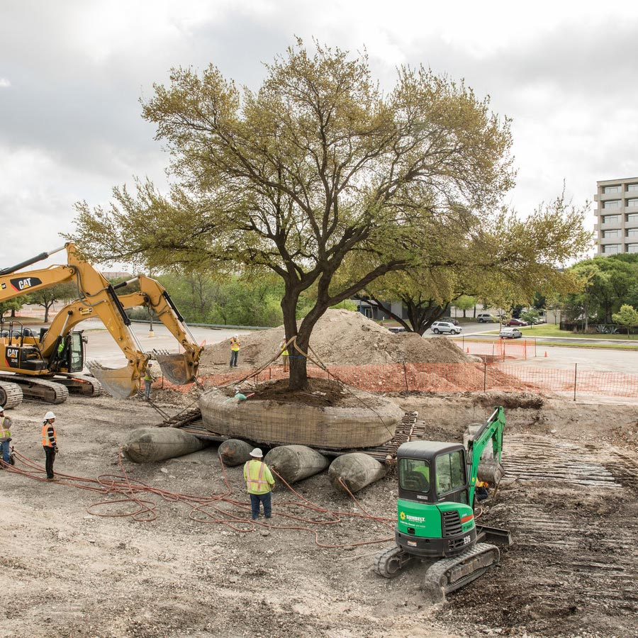 A tree from the South East parking lot of the Highland Mall is relocated