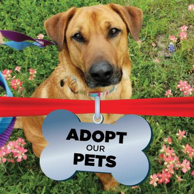 Adopt our Pets